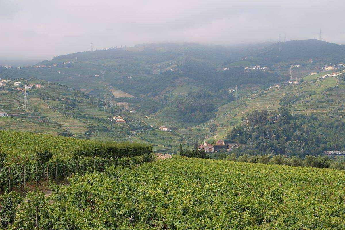 region-vinicole-QUINTA-DA-PACHECA